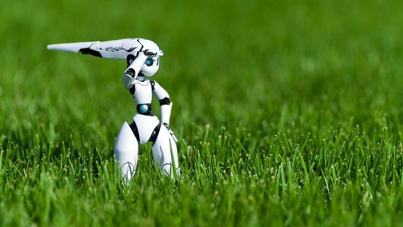 A robot in a field